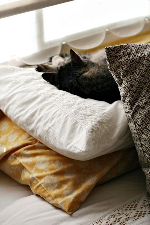 Hannah-cat