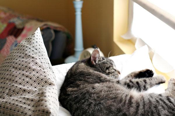 Hannah-cat-3