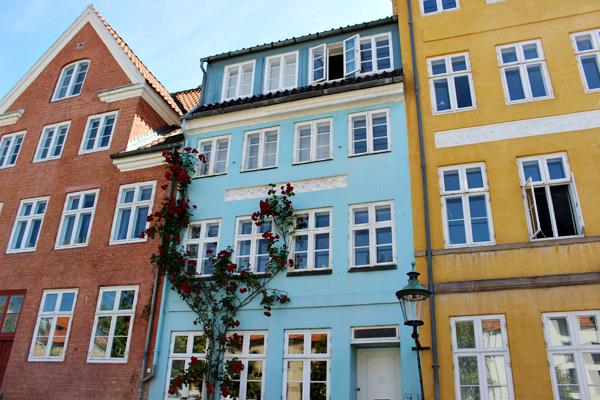 Christianshavn-climbing-roses